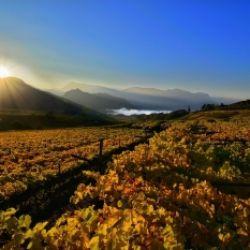 Passeggiata enologica attraverso il paese di Caldaro