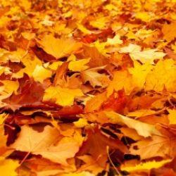 Saltellando su un tappeto di foglie...