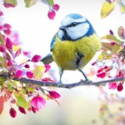 Torna la primavera...