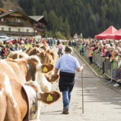 Sagra Obotola Kirchtag e ritorno delle mucche dagli alpeggi