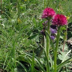 La Flora del Trentino
