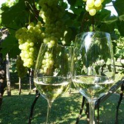 La storia delle antiche viti sudtirolesi