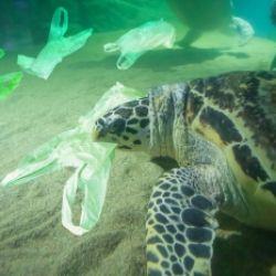 Cronache dal Mar Plastico