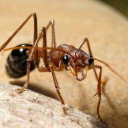 Come funziona un formicaio - Guida virtuale