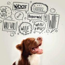 La comunicazione e il cane