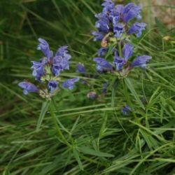 Die Flora des Obervinschgaus
