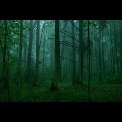 Transart 21 - MOVIE MONDAY II - The Ancient Woods