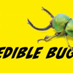 Incredible Bugs!