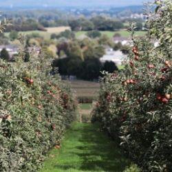 Il modello agricolo altoatesino. La strada di Malles