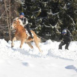 Haflinger Pferdeschlittenrennen und Skijöring in Mölten