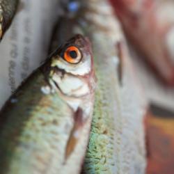 """LanaLive """"Rhetorik oder Fische sind schlechte Biographen"""""""