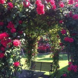 Matinée musicale nel giardino delle rose Oberdorner