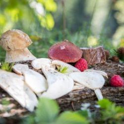 Settimane di specialità culinarie selvaggina e foresta