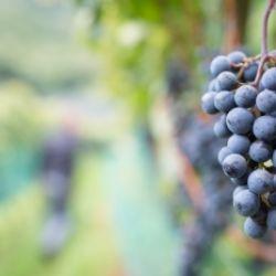 Festa del vino al Popphof