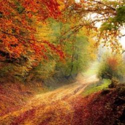 Natur erleben im Herbst
