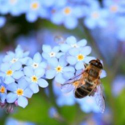 Schule des Wandels: Bienenstock - ganz nah