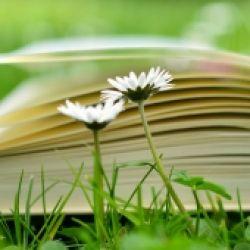 Buchpräsentation: Einmal Option und zurück