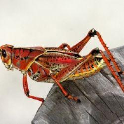 Kochkurs: Insekten - das Superfood von Morgen