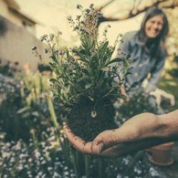 Gärtnern im Sinne der Permakultur