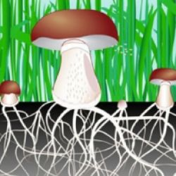 Die Pilze: Workshop für Kinder (in deutscher Sprache)