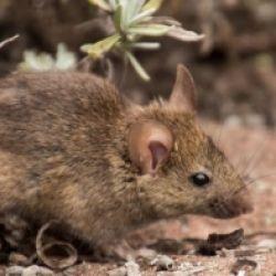 +++ RINVIATO +++ La vita nascosta dei topi