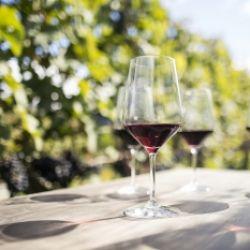Visita guidata alla viticolture Rebhof