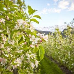 Il paese delle mele - Guida e degustazione al maso Sonnhöfl