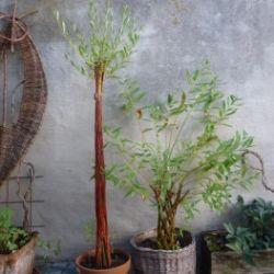 Lebende Weidenwerke - Schnuppertag