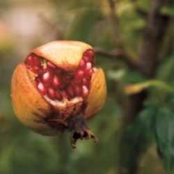Frutti affascinanti!