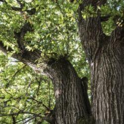 Foto safari mitico-mistico nella foresta di Monticolo