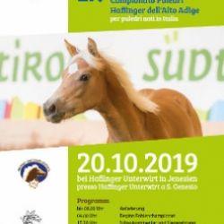 Campionato Provinciale Puledri 2019