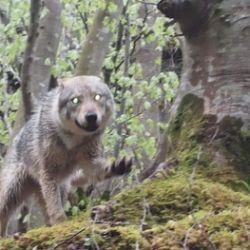 Presentazione Libro: In cammino con i lupi