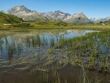 """Vortrag: Einblicke in die Flora von Osttirol – mit Ausblicken auf eine """"Flora von Osttirol"""""""