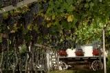 Führung durch das Weinmuseum mit Weinprobe