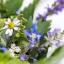 Alla scoperta delle erbe selvatiche e officinali